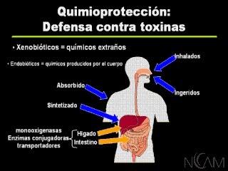 Detoxificación: eliminación de toxinas