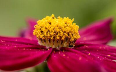 Una primavera con el polen a raya
