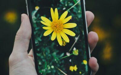 Controlando el polen desde el móvil